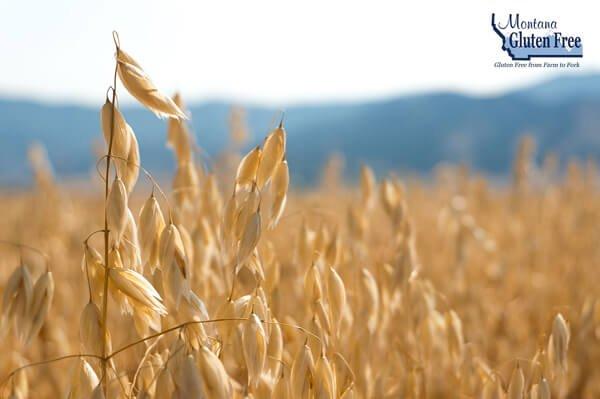 Montana Gluten Free Oats